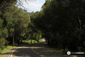 Parque Forestal de Monsanto: Flora y Fauna en la capital de Portugal