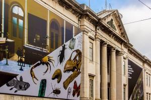 Imagen de la fachada del MUHNAC. Fotografía de David Felismino (MUHNAC), cedida a sieteLisboas.
