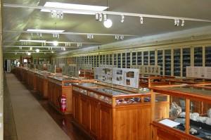 Imagen de la Sala de Paleontología y Estratigrafía del Museo Geológico, cedida a sieteLisboas.