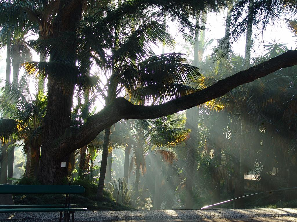 Fotografía del Jardín Botánico, tomada por José Cardoso, cedidad por el MUHNAC a sieteLisboas.