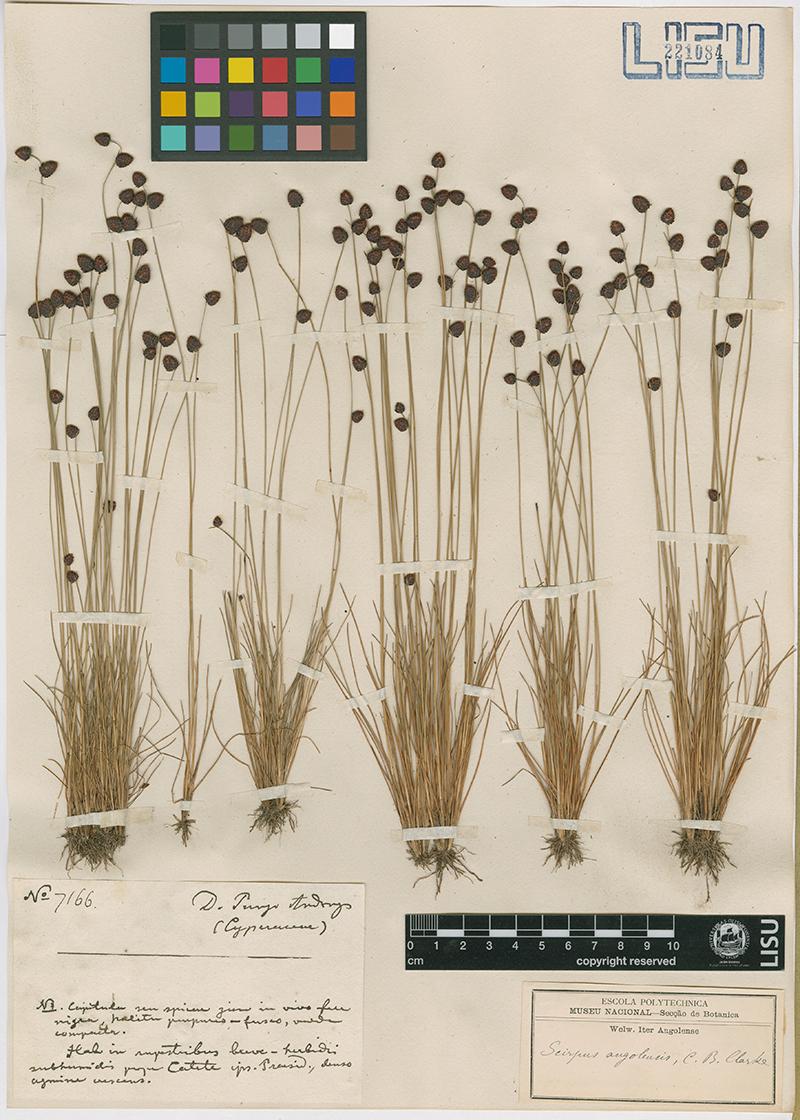 Imagen de hoja de herbario del Jardín Botánico, cedida por el MUHNAC a sieteLisboas.